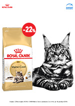 RC_Maine_Coon--22%_sm.jpg